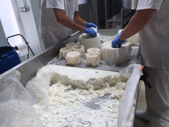 elaboracion de quesos artesanales procedente de leche de cabra de ganaderos locales